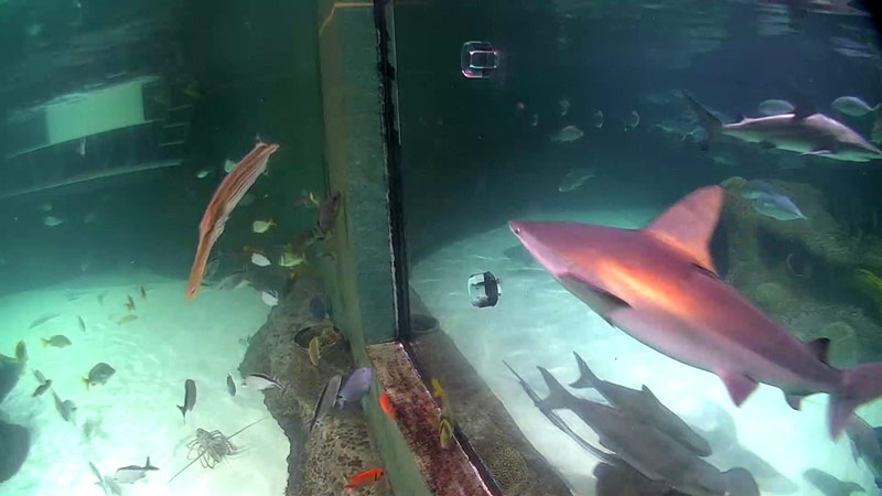 Aquarium Encounters: Shark Cam